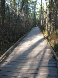 raised-walkway-through-forest-1427490-m